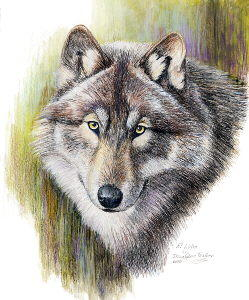 Lobo il re dei lupi