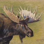 J-ghere-moose-8x10-791320