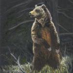 The Bear - Small.jpeg